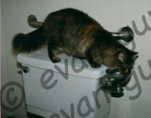 Automatic Cat Water Dish